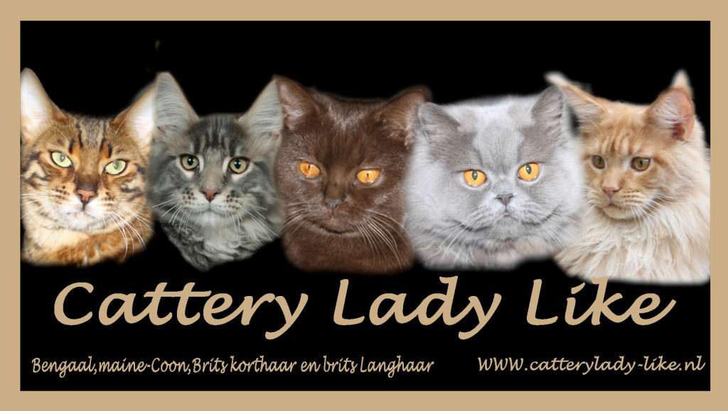 banner cattery lady-like